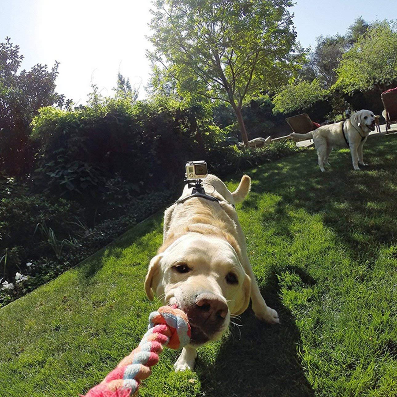 Ballylelly Accesorios de la cámara Arnés para Perros Montura ...