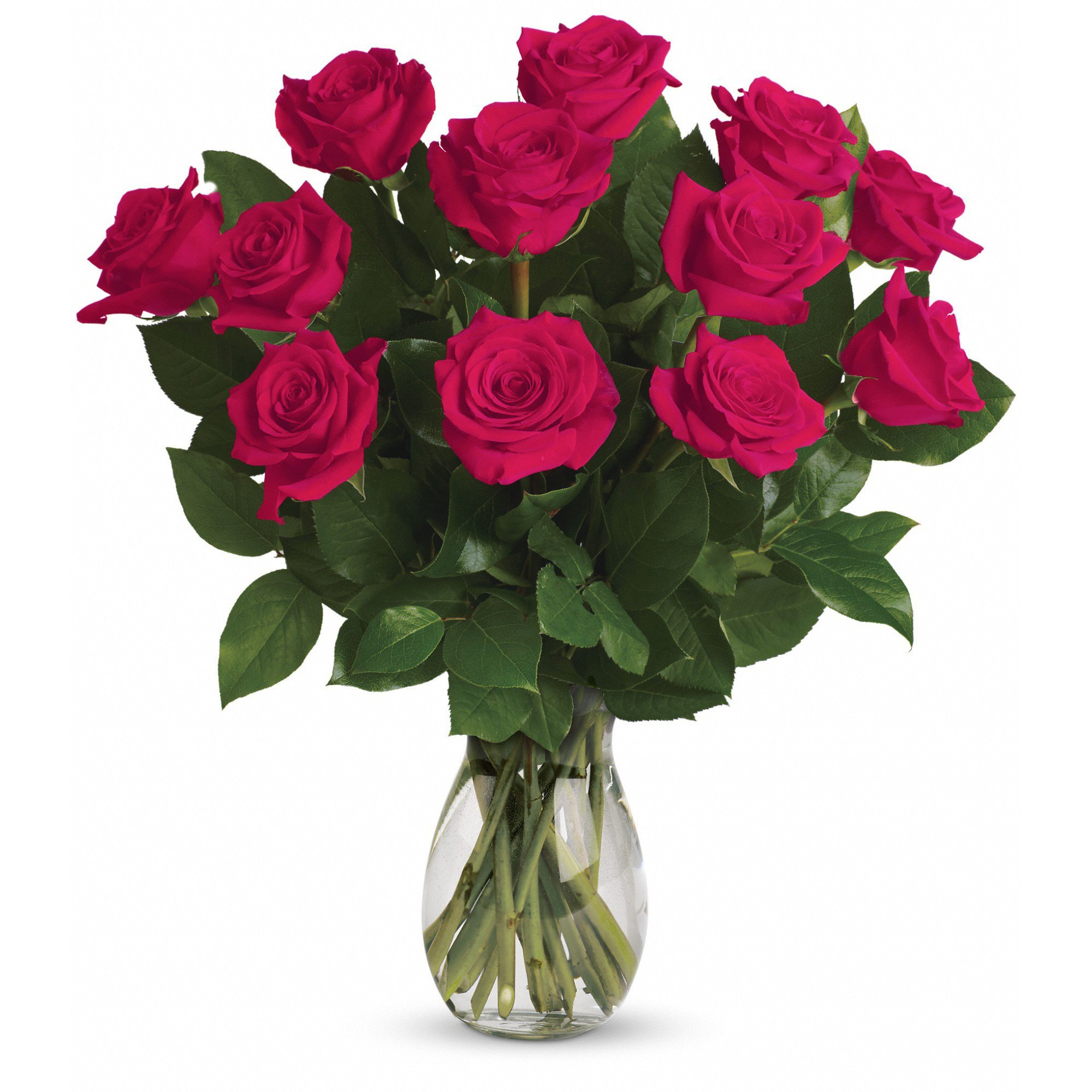 Farm Direct Rose Bouquet of 12 Fresh Cut Roses with Vase (Hot Pink)