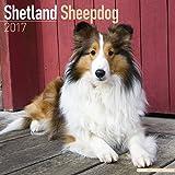 Shetland Sheepdog Calendar 2017 - Sheltie - Dog Breed Calendars - 2016 - 2017 wall calendars - 16 Month by Avonside