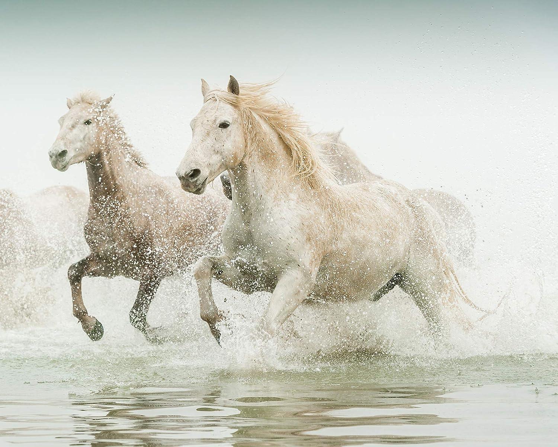 Gillian Morgan White Horses in the Sunset | 1200x1500