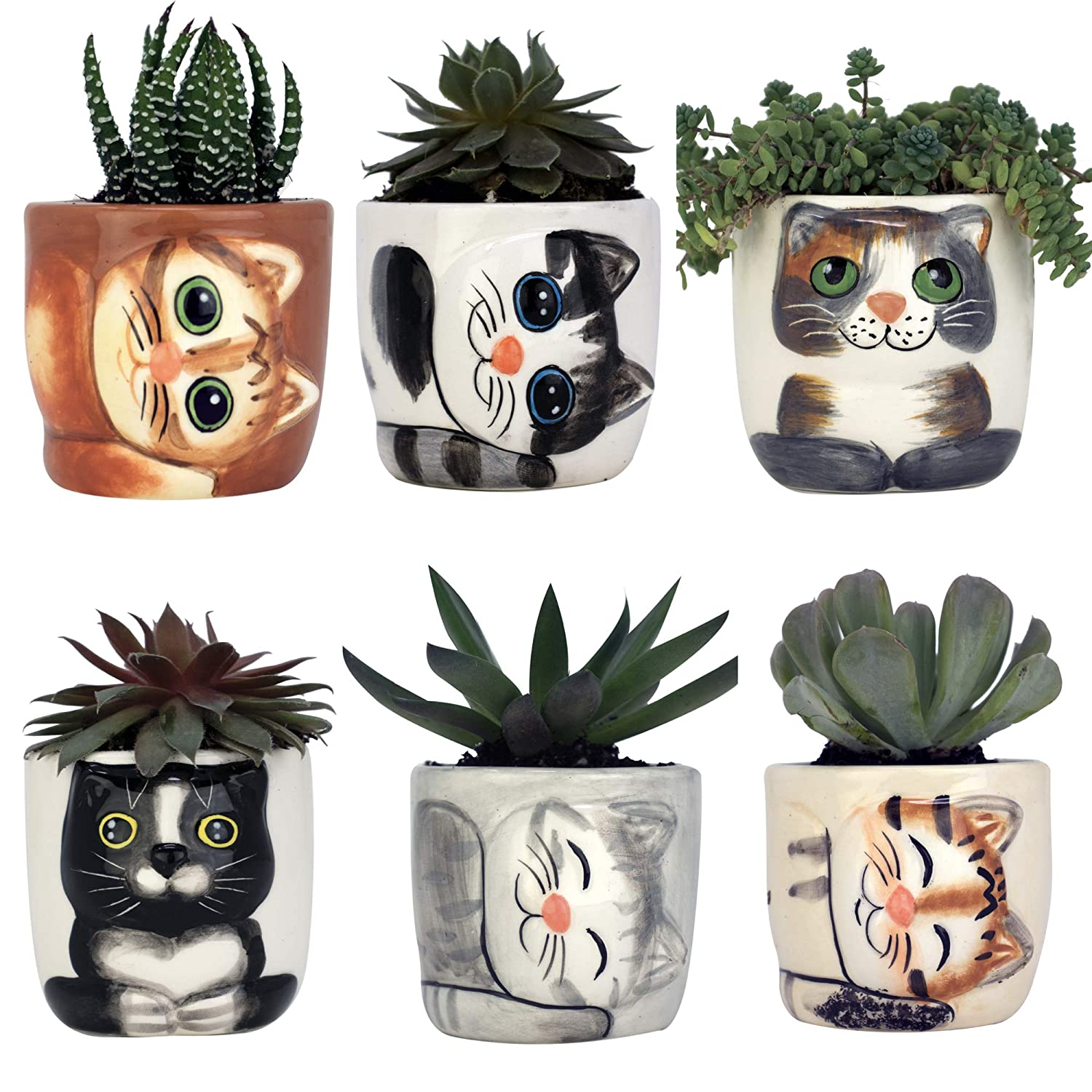 Window Garden - New Small Kitty Pot Collection of 6 – Purrfect for Mini Succulents, African Violets or Small Fairy Garden Plants. Top Quality, Super Cute Planter Gift for Cat Lovers, Christmas.