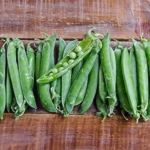 Green Arrow Pea Garden Seeds - 1 Lb ~1,800 Seeds - Non-GMO, Heirloom Vegetable Gardening & Micro Pea Shoots Seeds