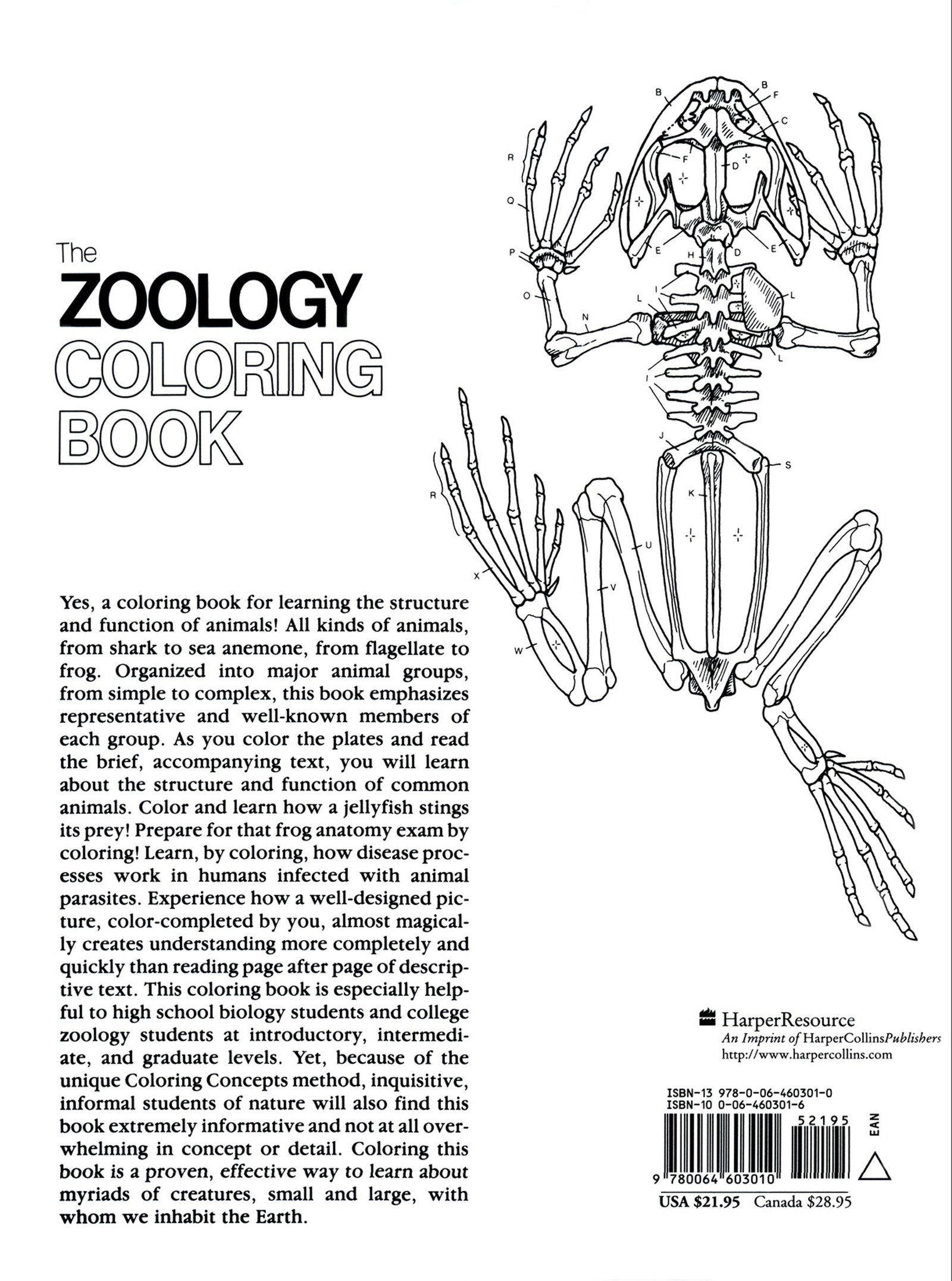 The Zoology Colouring Book College Outline S Amazoncouk L M Elson Cinthea Vadala Jacquelyn Giuffre 9780064603010 Books