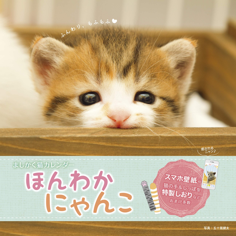 ましかく猫カレンダー ほんわかにゃんこ インプレスカレンダー2019