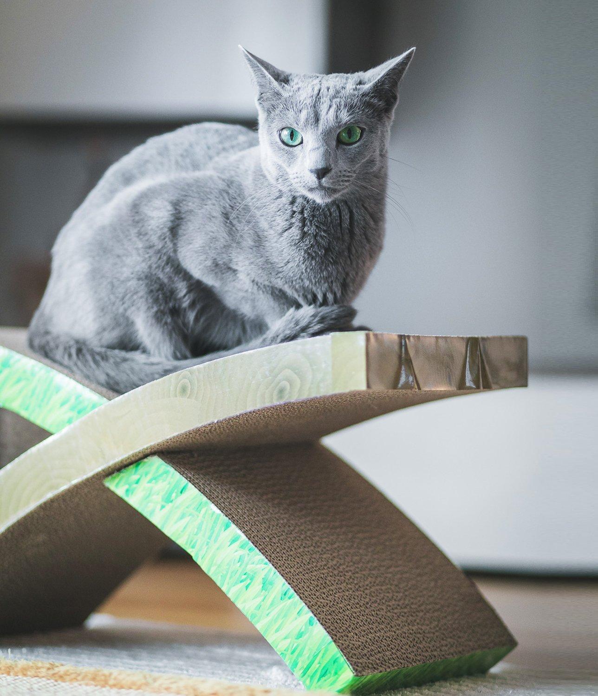 ¿Qué son los rascadores de cartón para gatos?