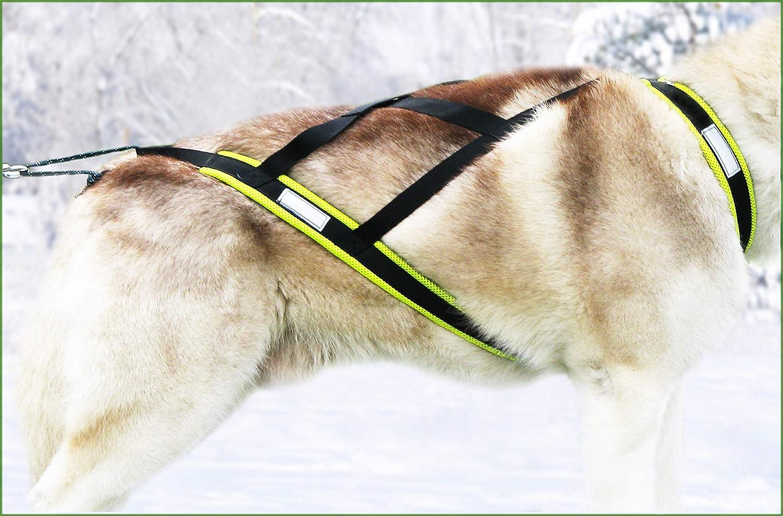 X-Back harnais pour chien pour le v/élo ski-joering noir // jaune fluo couleur tra/îneau scooter