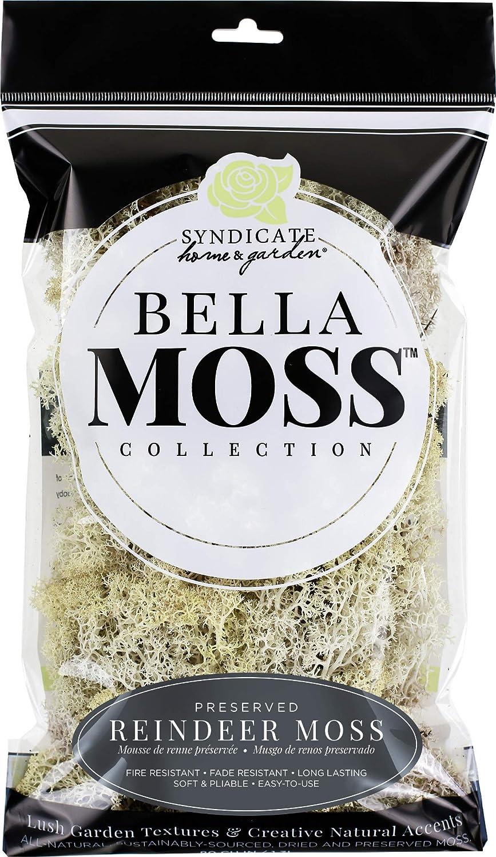 Bella Moss 1406121082 Reindeer Bag Moss, Natural