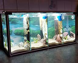 Komplettset aquarium zucht becken betta 24 l garnelen for Kampffisch zucht