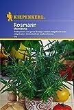 Rosmarin - Mehrjährig -