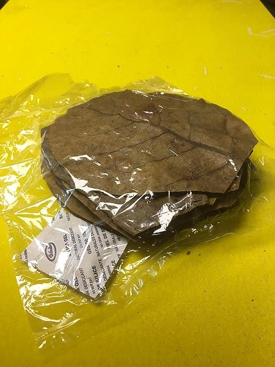 Seemandelbaumblätter 10 Stück 10-15cm natürlich gereifte und getrocknete Spitzenqualität - Catappa Leaves Indian Almond