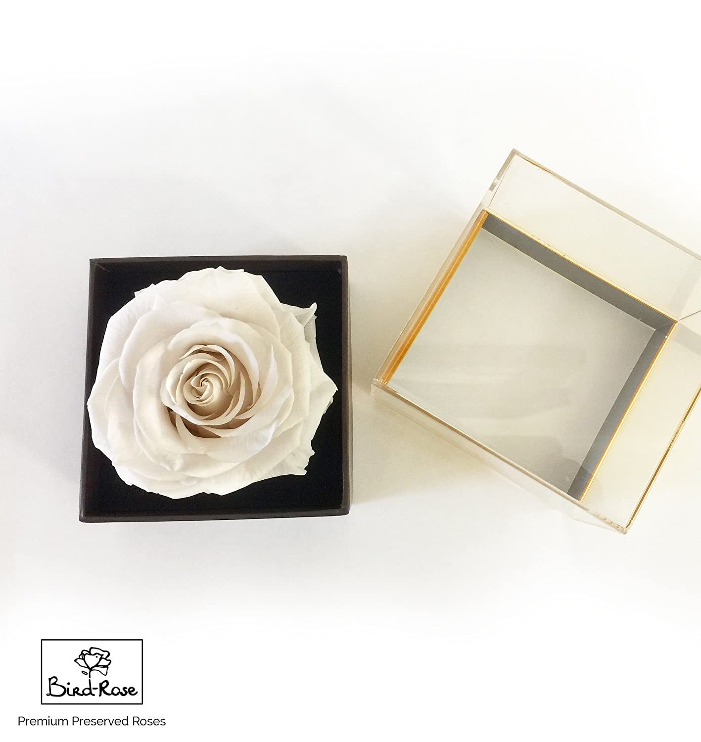 Eternal Rose / Preserved Rose/ Long lasting Rose XXL (8.5 to 11 cm) - Clear Acrylic Designer Giftbox - Several Colours available Bird-Rose