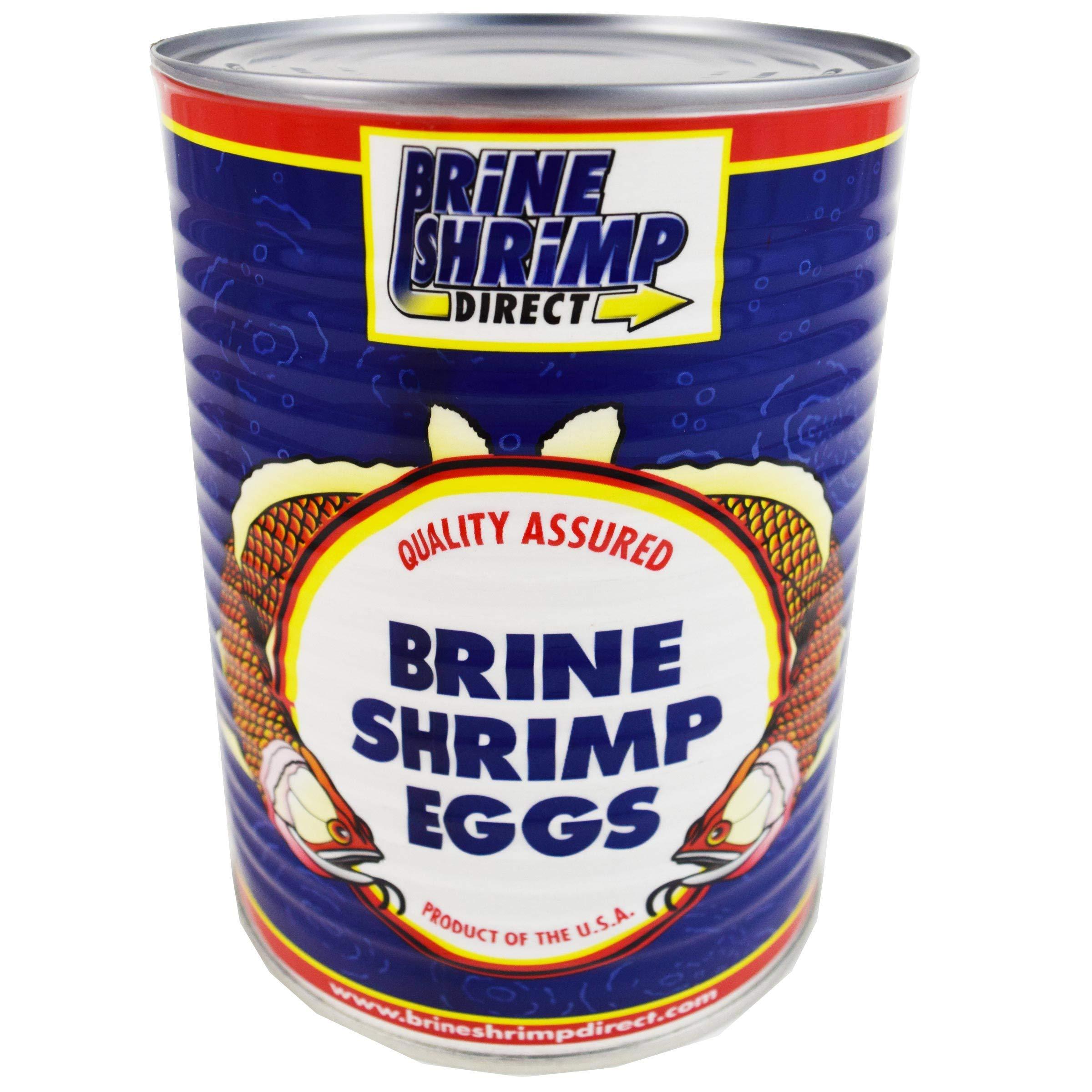 Premium Grade Brine Shrimp Eggs ( 90%), 16 oz. by Brine Shrimp Direct