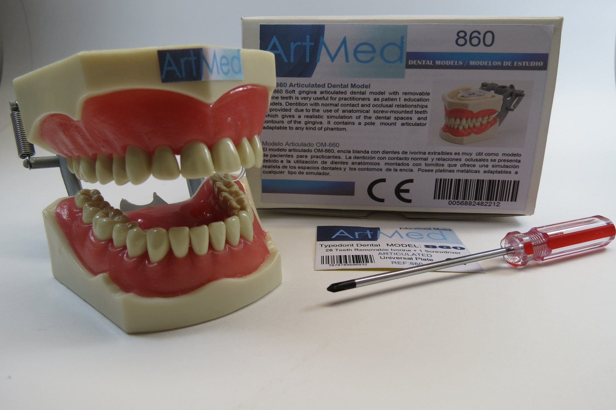Dental Typodont Anatomy Teaching Model With Removable Ivorine Teeth ...