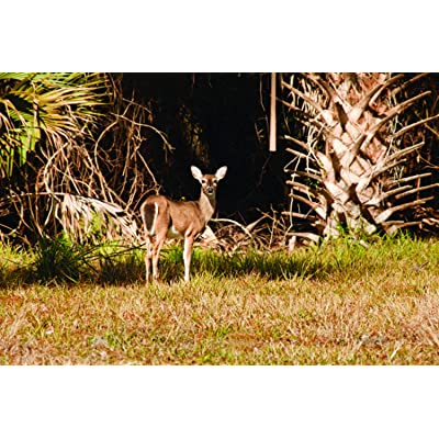 Nature's Seed 1 Acre Florida Tropics Big Game Food Plot Pasture Blend : Garden & Outdoor