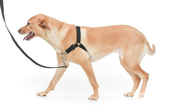3 opinioni per Pettorina per cane regolabile, per impedire al cane di tirare
