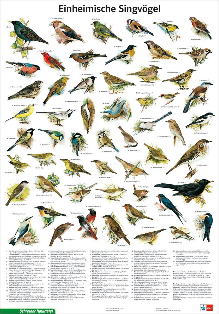 625392b6f25 Schreiber Naturtafeln, Einheimische Singvögel: Amazon.de: Bücher