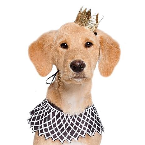 Amazon.com: Disfraz de perro con texto en inglés