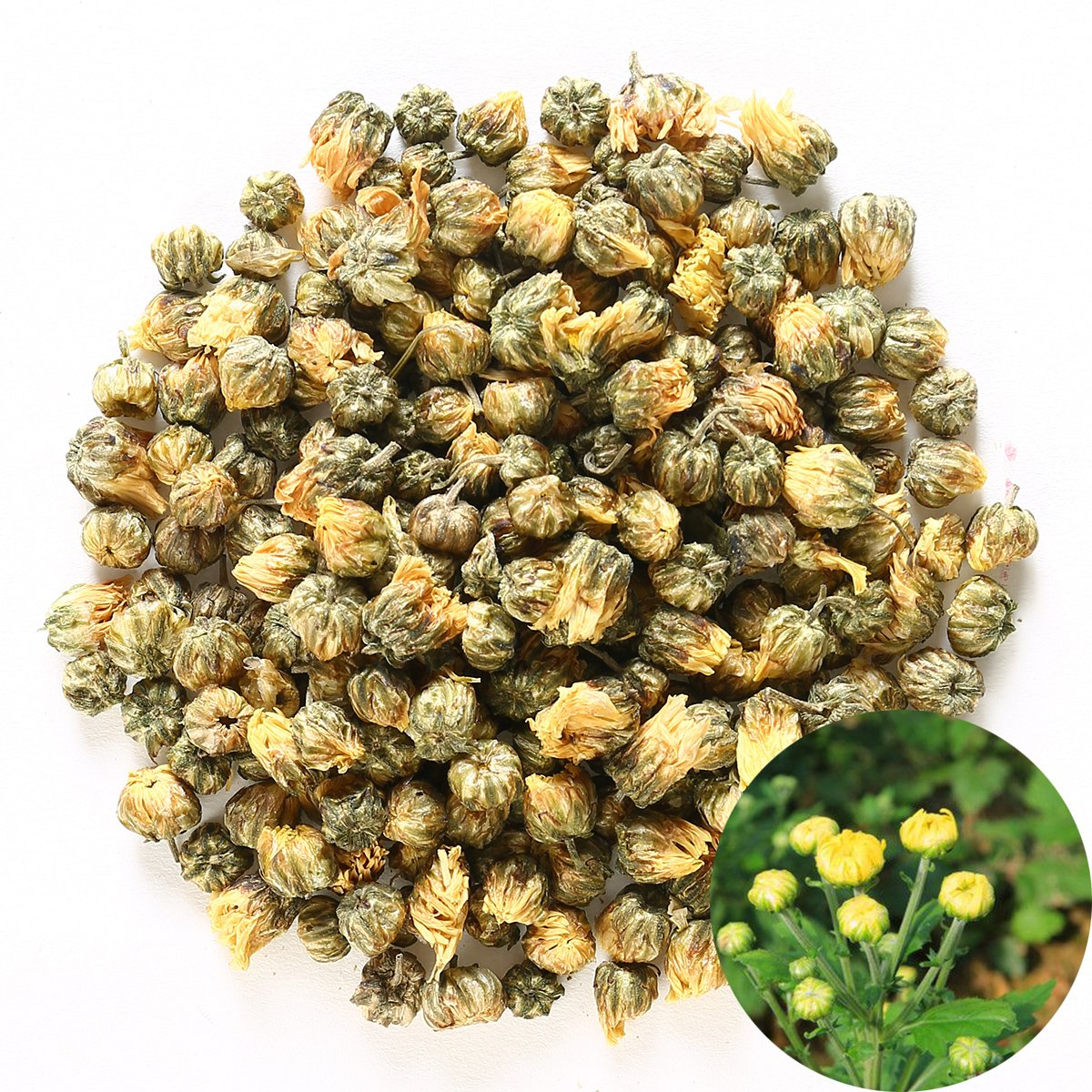 TooGet Traditional Health Herbs, Chrysanthemum Buds, Tai Ju, Natural Premium Golden Fetal Chrysanthemum Flower Floral Dried Herbal Wholesale, Culinary Food Grade - 4 OZ
