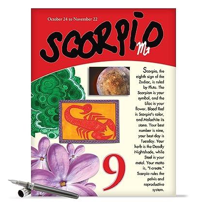 Amazon Scorpio Zodiac Sign Happy Birthday Card 85 X 11