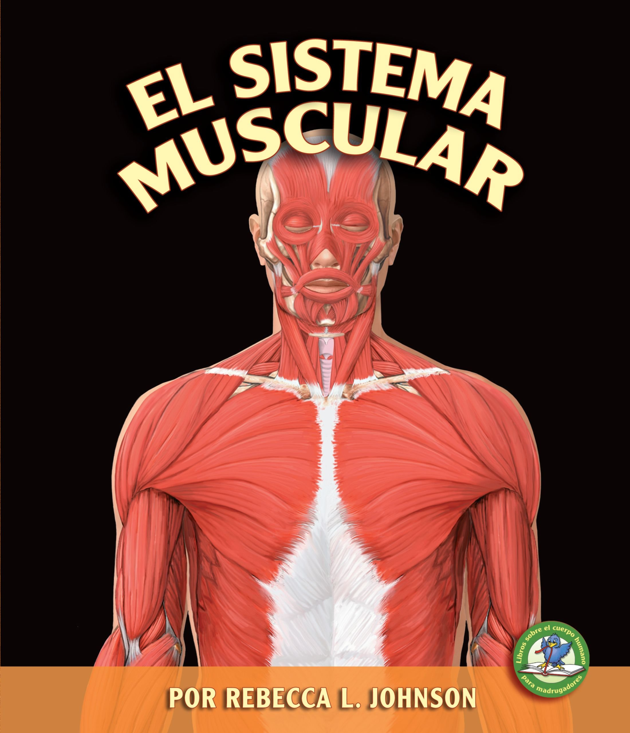 El Sistema Muscular/the Muscular System (Libros Sobre El Cuerpo Humano Para Mandrugadores/early Bird Body Systems) (Spanish Edition) by Ediciones Lerner
