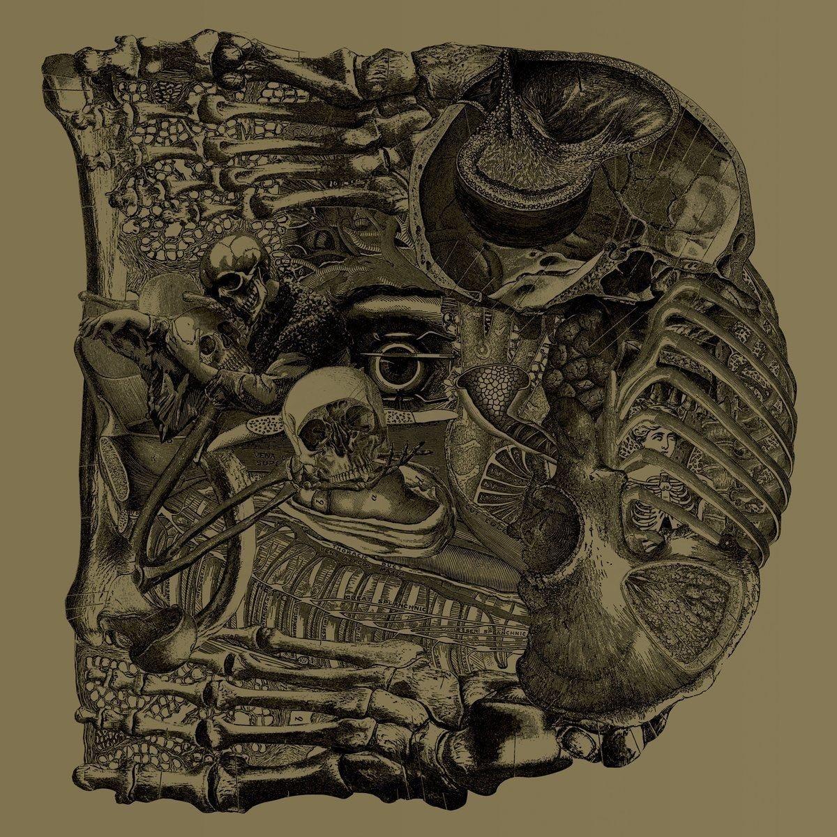 Vinilo : Boris - Dear (Gatefold LP Jacket, Digital Download Card)