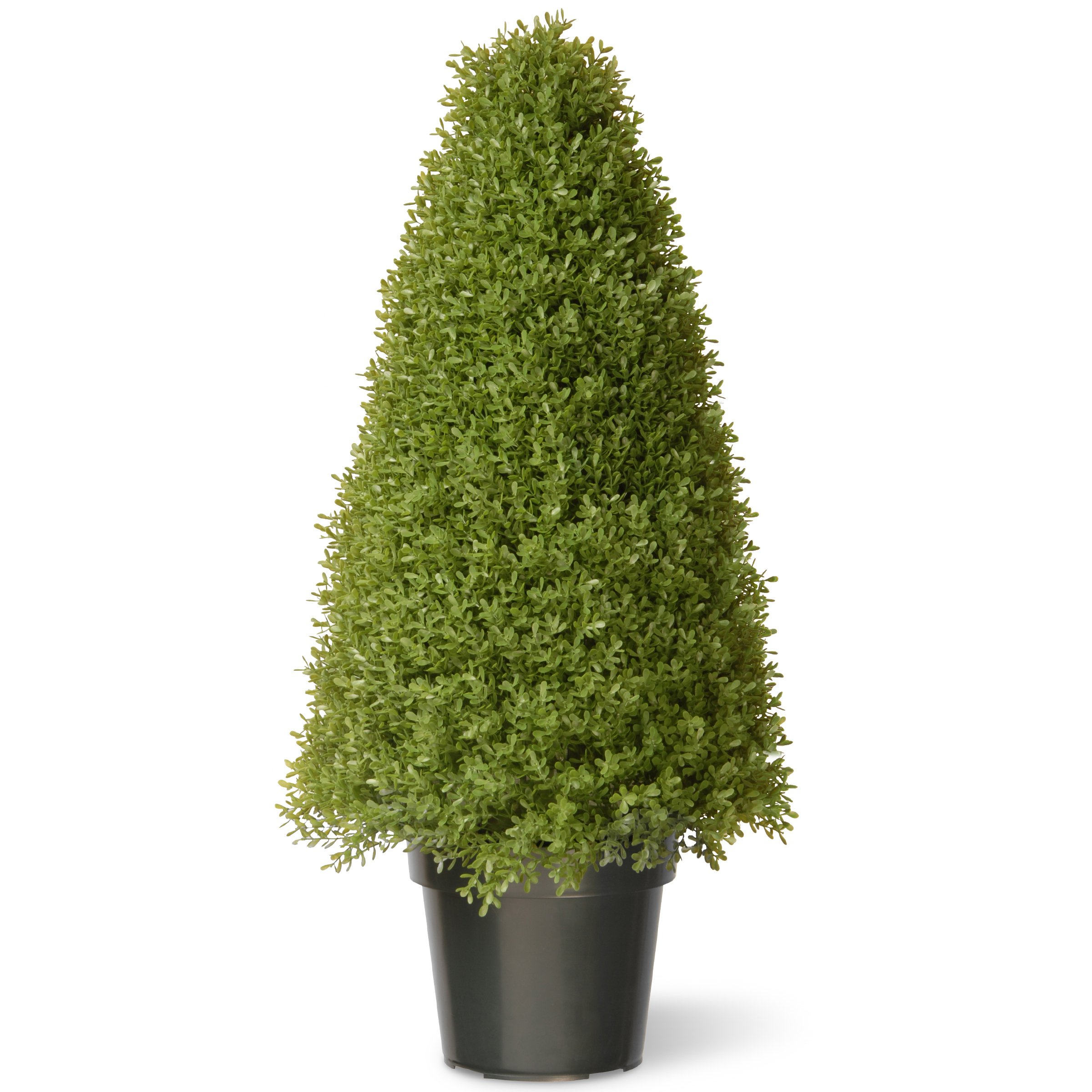National Tree 36 Inch Boxwood Tree in Green Pot (LBX4-36)