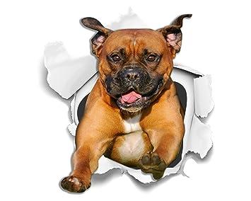 WinstonAndBear Perro 3D Stickers - 2 Pack - Super Staffie adhesivo para la pared, nevera Staffordshire Terrier: Amazon.es: Hogar