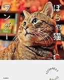ぽちゃ猫ワンダー