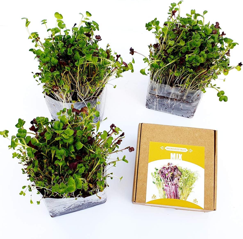 Garden Pocket Microvegetales Pop UP - Kit de Interior de germinados de Semillas ecológicas x3 (Mix-Alfalfa, Rabanito, Trébol y NAbo)