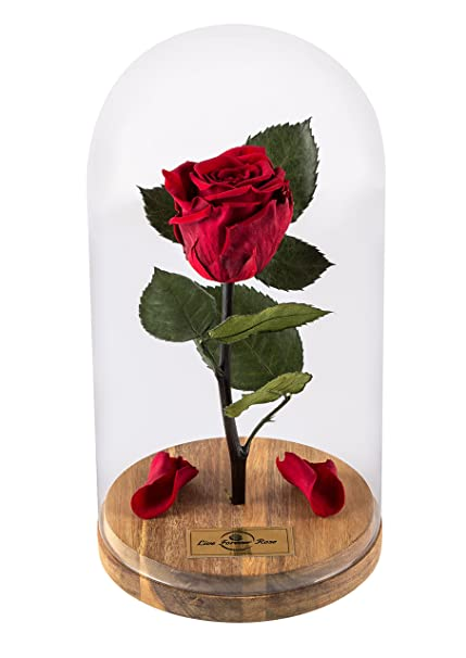 Amazoncom Beauty And The Beast Rose Live Forever Rose With