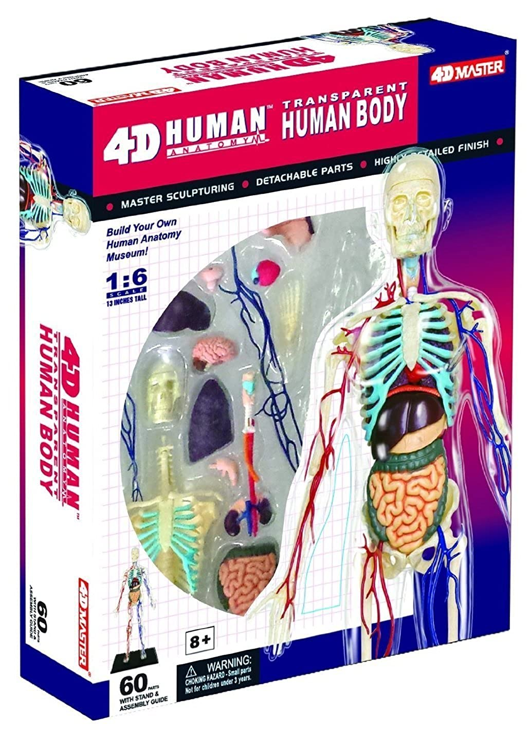 Game Tedco Wild Science Transparent Human Body Learning Toys