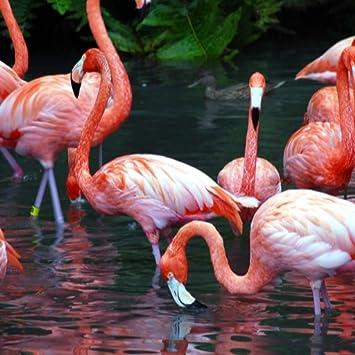 Amazoncom Flamingo Wallpaper Hd Wallpapers Of Flamingos