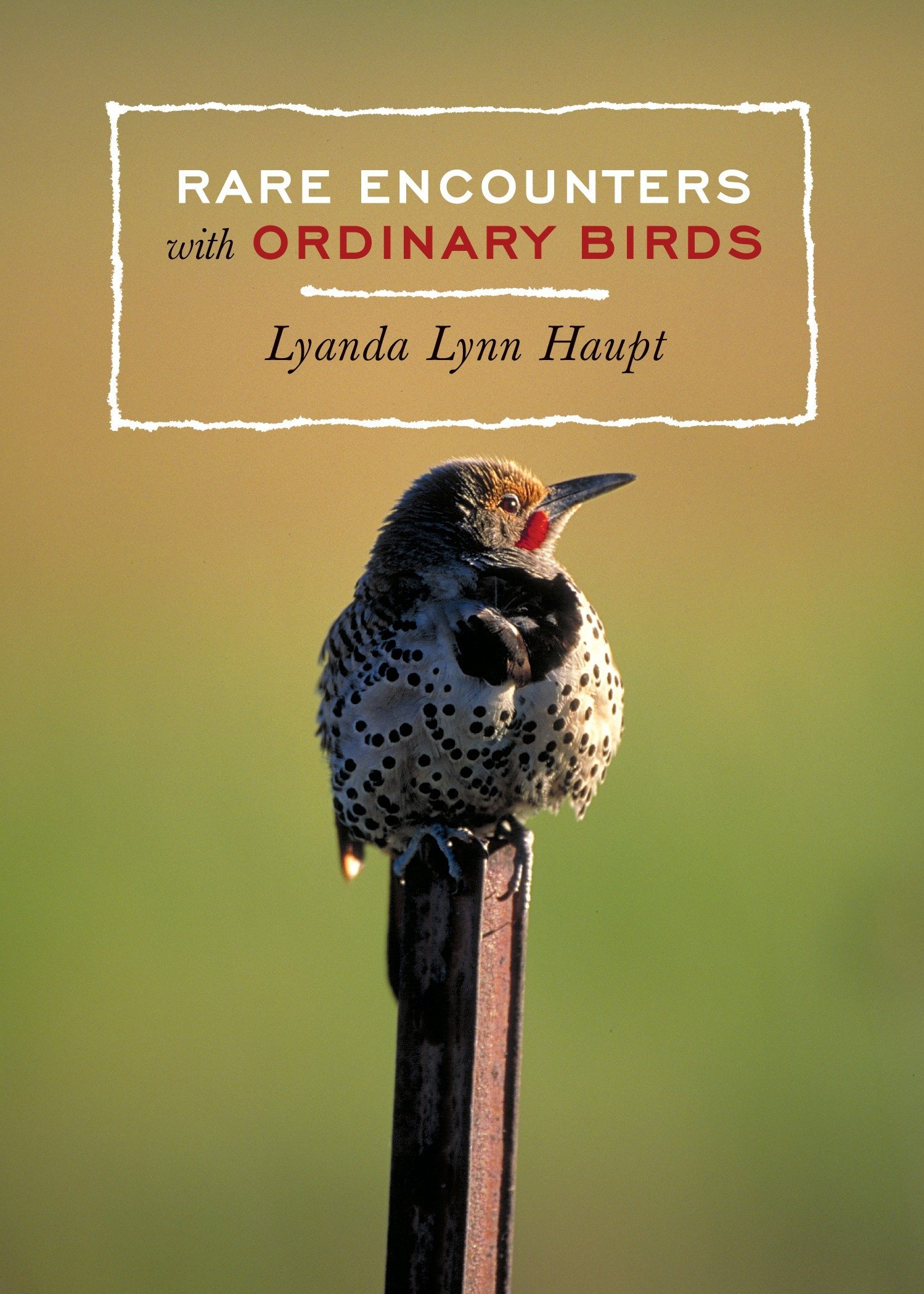 Read Online Rare Encounters with Ordinary Birds pdf epub
