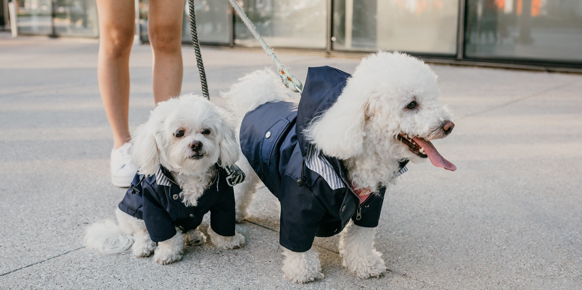 Navy Blue Zip Up Dog Raincoat with Reflective Buttons, Pockets, Rain/Water Resistant, Adjustable Drawstring, Removable Hood - Size XS to XXL Available - Stylish Premium Dog Raincoats by Ellie (S) by Ellie Dog Wear (Image #6)