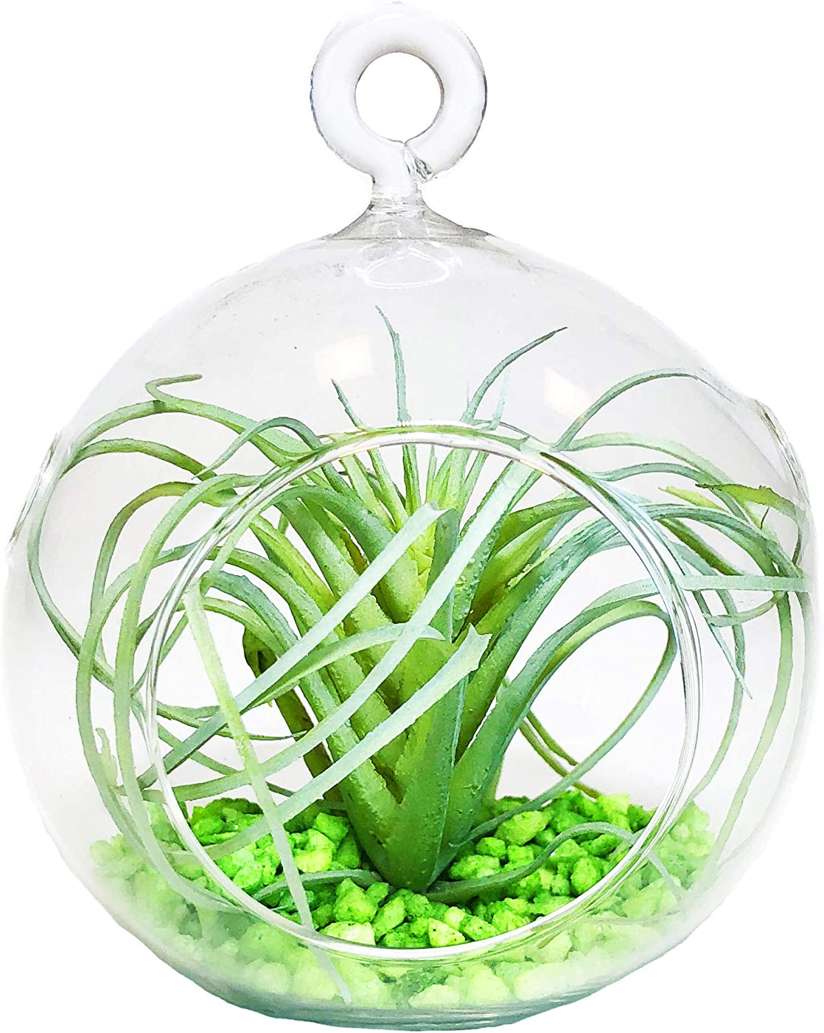 CYS EXCEL Plant Terrarium, Glass Orbs, 4.5 Tall x 4 Wide, Pack 6 Air Plants, Tea Light Candle Holders, Succulents Moss Miniature Garden Planters Home D cor