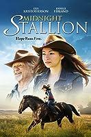 Midnight Stallion
