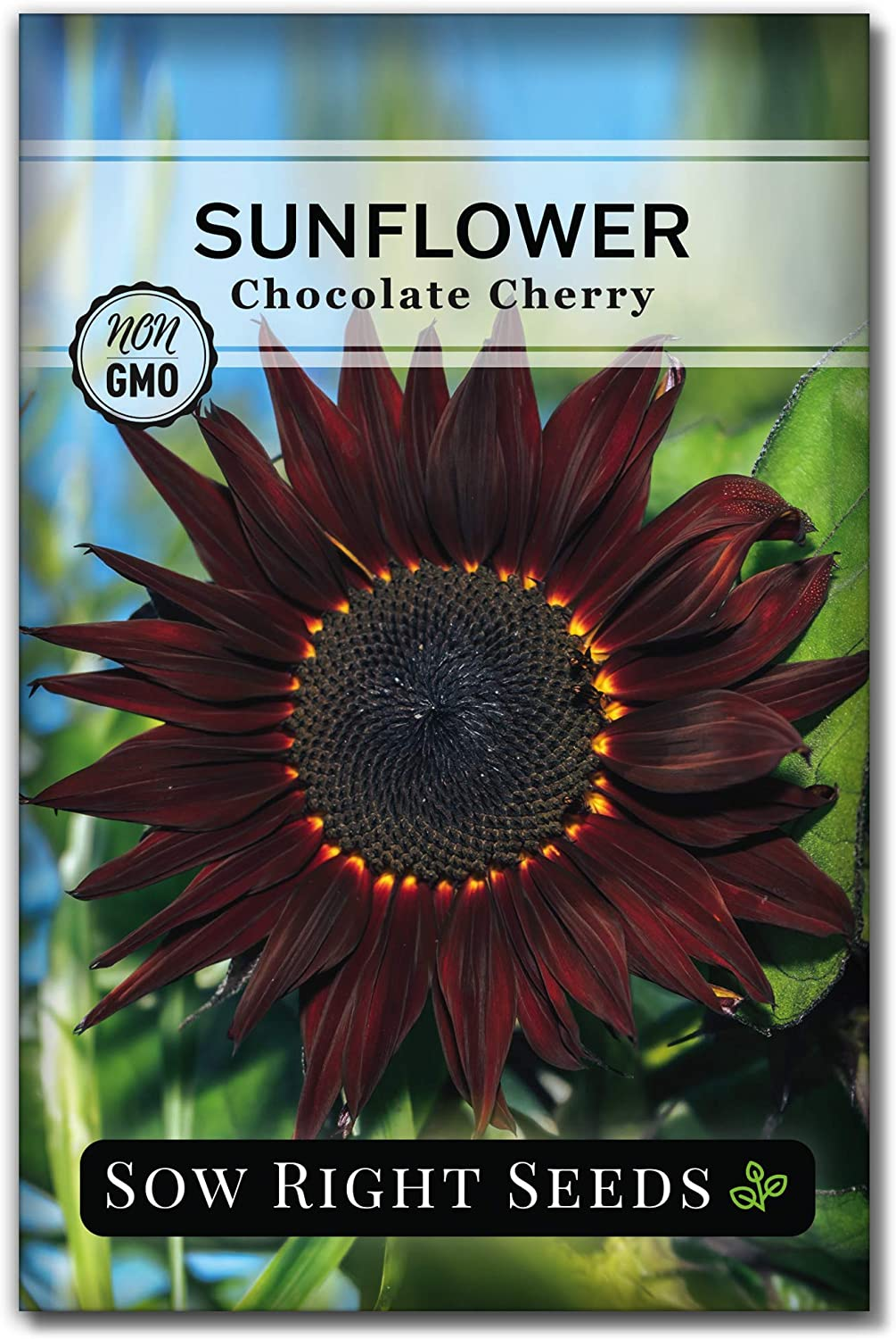 Sow Right Seeds - Chocolate Cherry Sunflower Seeds for Planting - Non-GMO Heirloom Packet with Instructions to Plant a Home Vegetable Garden