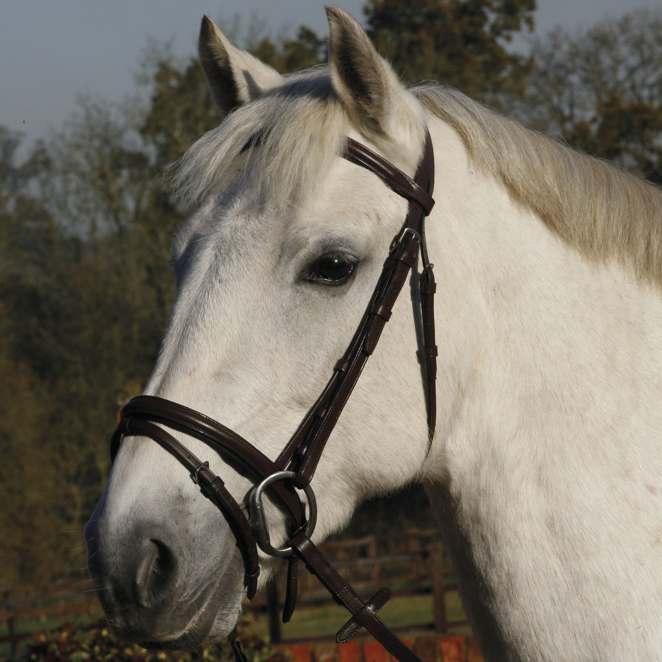 JHL Flash Snaffle Bridle Pony brown