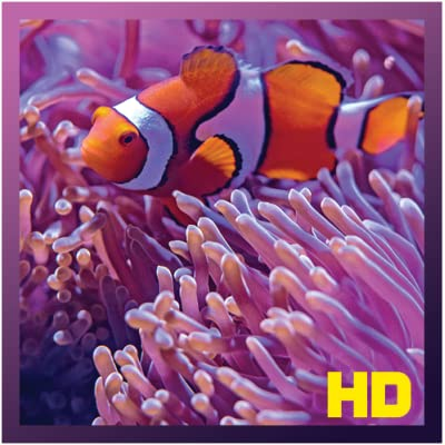 Coral Reef Aquarium Fish HD
