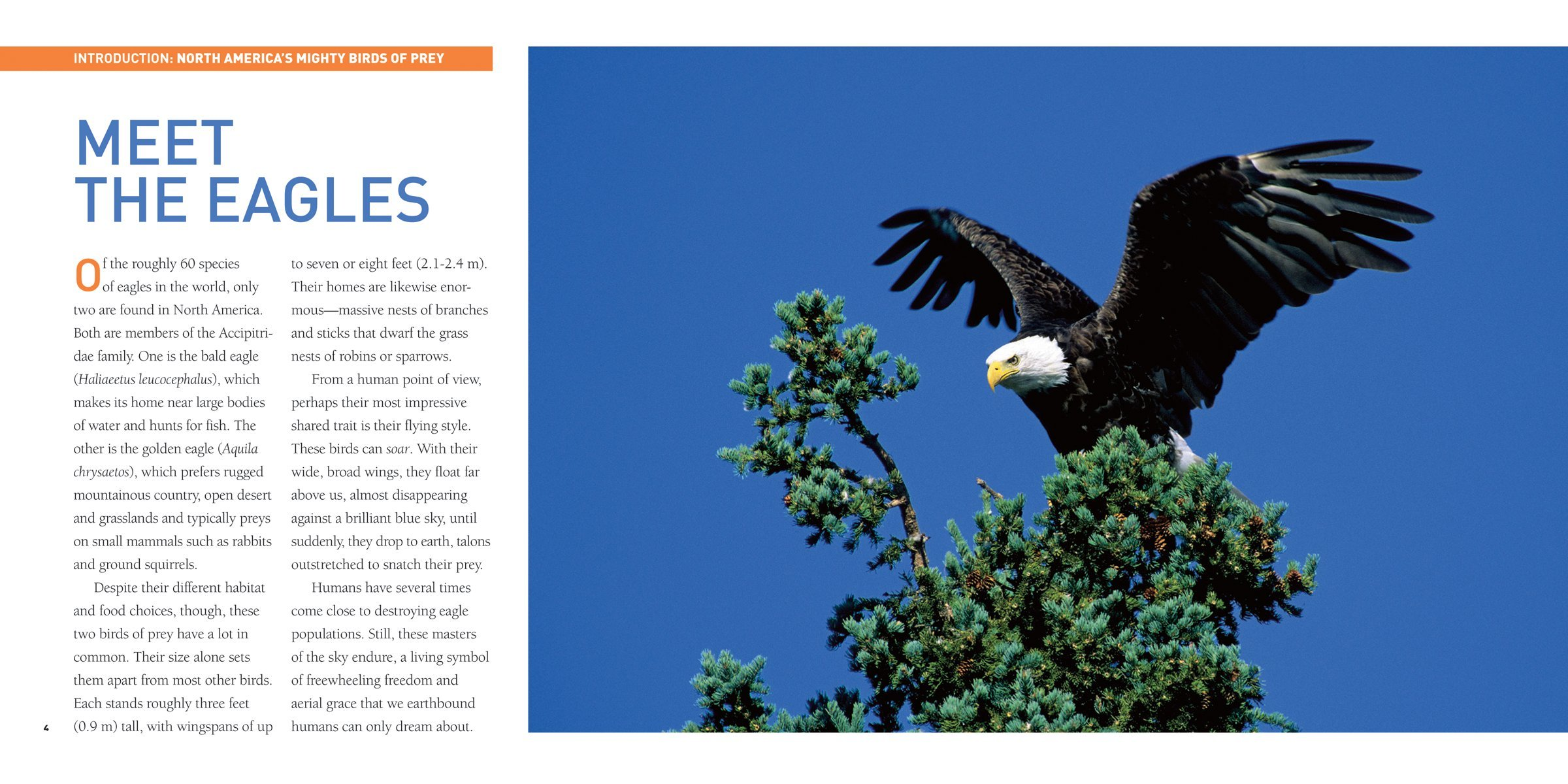 Exploring The World Of Eagles Tracy Read 9781554076567 Life Cycle Also Bald Eagle Diagram In Addition Books