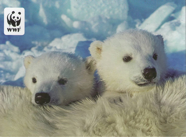 Amazon.com : WWF World Wildlife Foundation Snow Babies Season\'s ...