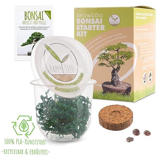 GROW2GO Bonsai Kit incl. eBook GRATUITO - Set con mini invernadero ...