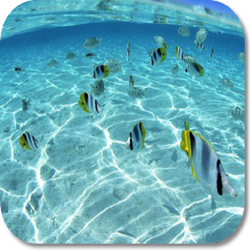 Under Water HD Wallpapers (Best Mobile Calendar App)