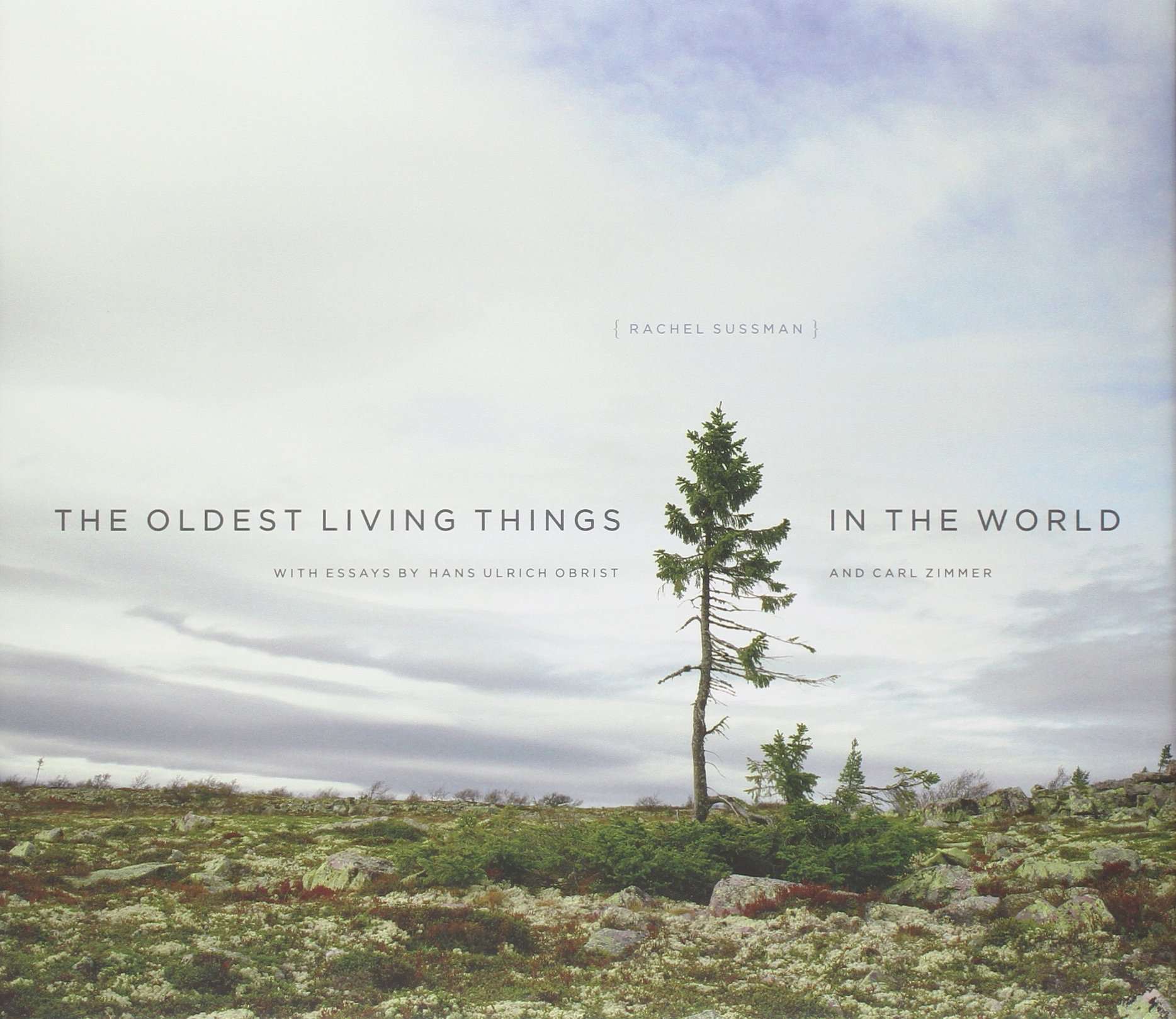 The Oldest Living Things In The World: Rachel Sussman: 9780226057507:  Amazon.com: Books