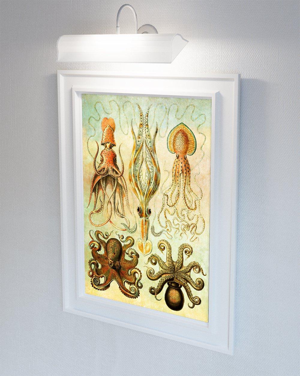 Amazon.com: Ernst Haeckel Gamochonia Print Octopus & Squid Art ...