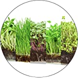 """Window Garden Microgreen Assortment 5 Pack Refill – Use with Grow n Serve Kit, Multi-Use 15"""" x 6"""" Planter Tray, Pre-Measured"""