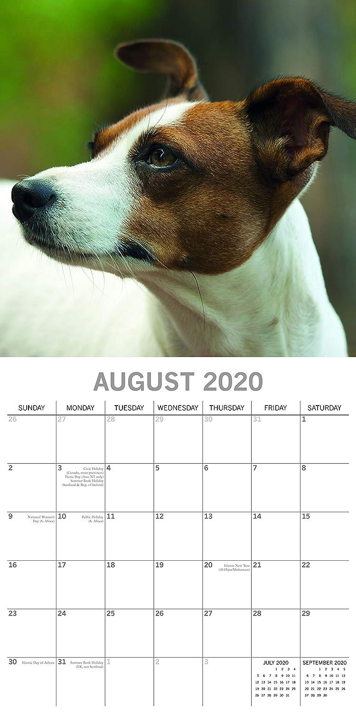 quadrato Jack Russells Calendario da parete 2020
