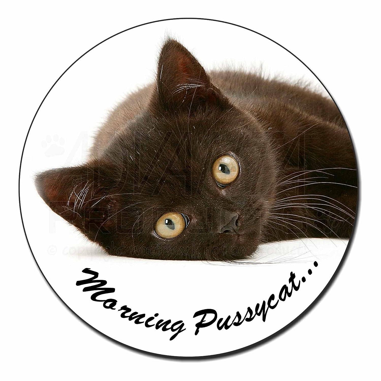 MP-185FM Black Cat /'Morning Pussycat/' Fridge Magnet Stocking Filler Christmas G