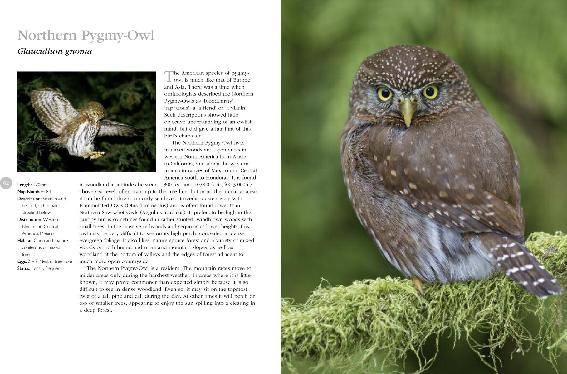 Theplete Book Of North American Owls: James Duncan: 9781607107262:  Amazon: Books