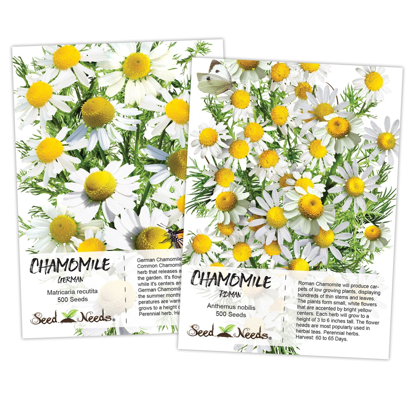 Amazon Roman Chamomilegerman Chamomile Duo Anthemus Nobilis